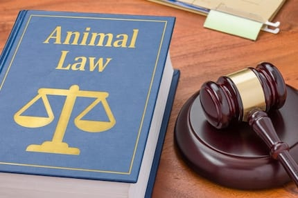 Animal Law For Lawyers CLE